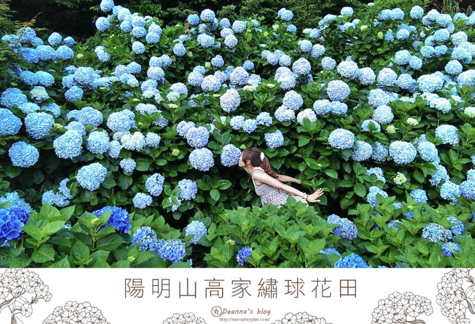 高家繡球花