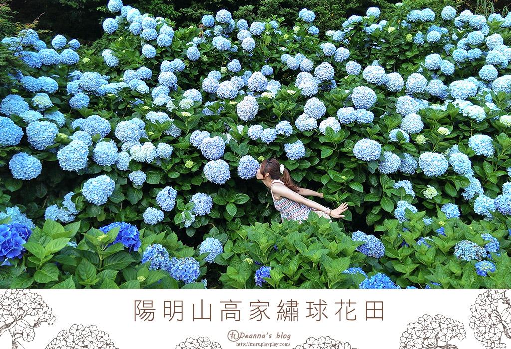 台北陽明山 ❀ 高家繡球花田 滿滿花牆擄獲少女心