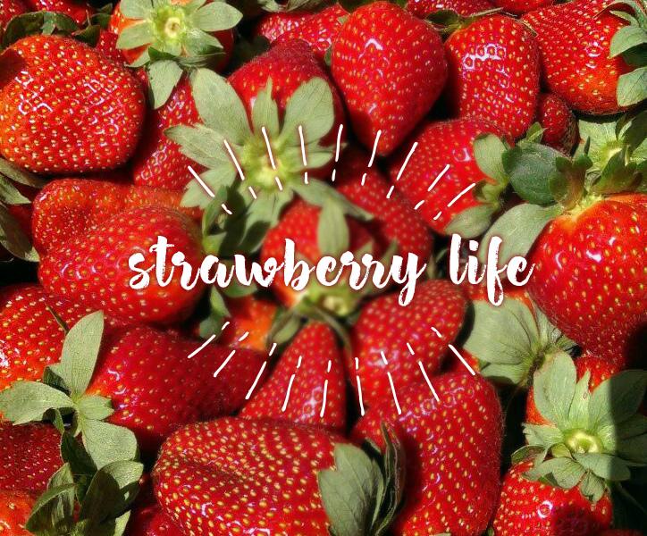 打工渡假 · 卡布丘Caboolture · 採草莓