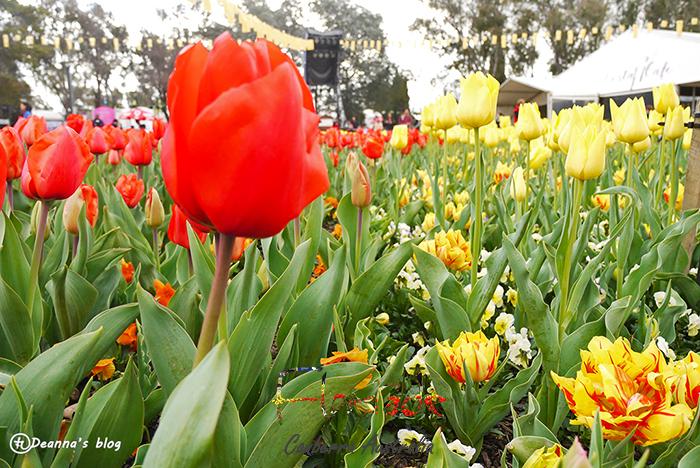 澳洲坎培拉花季 ✿ Canberra Floriade 季節限定春之饗宴