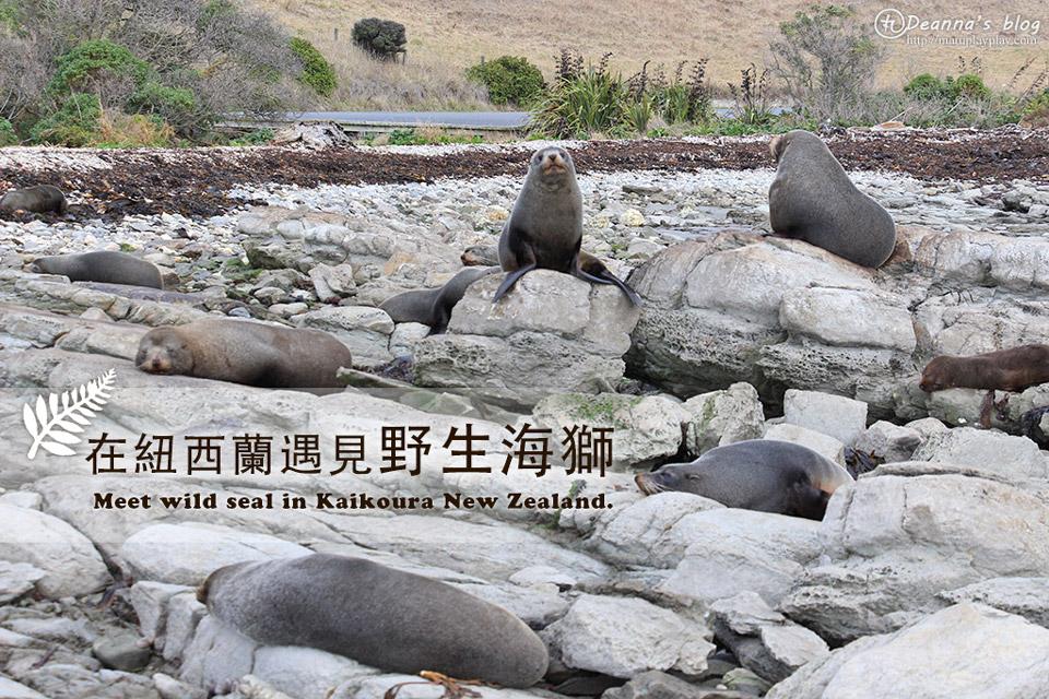 紐西蘭南島 凱庫拉|前進野生毛皮海獅棲息地