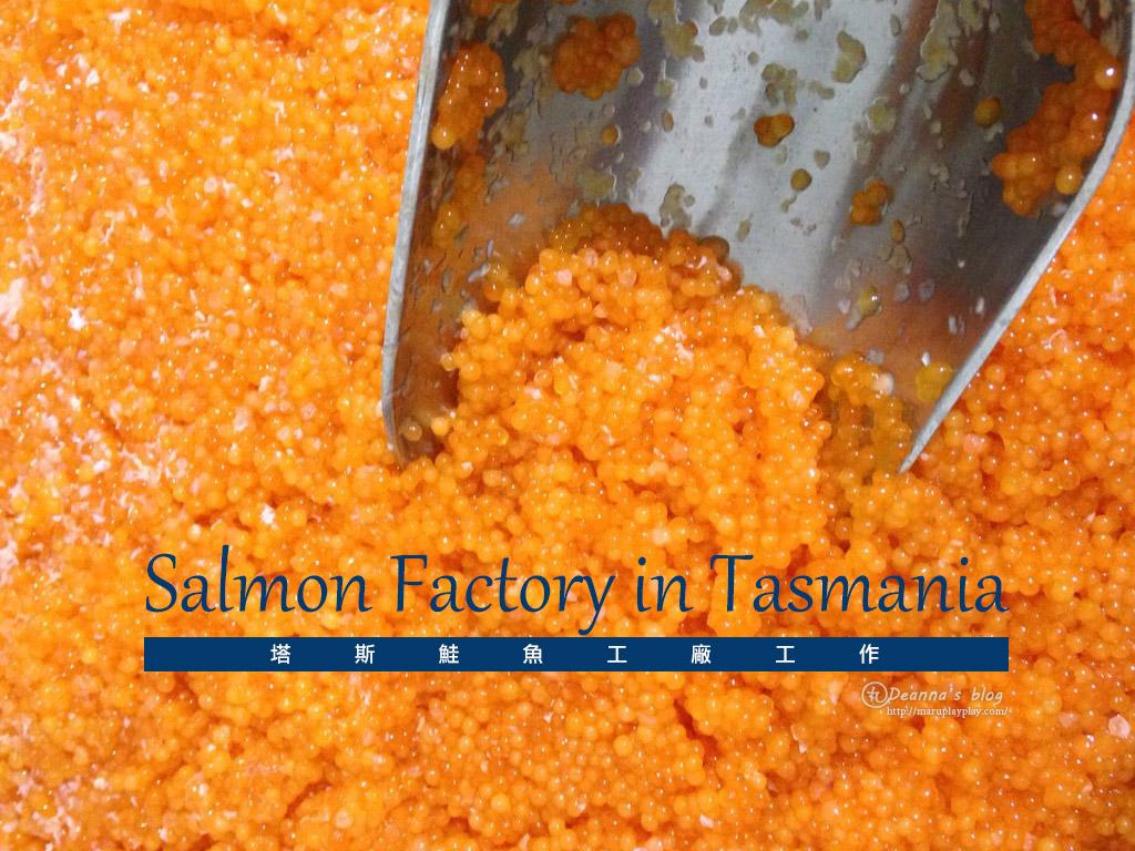 打工度假 ‧ 塔斯鮭魚工廠工作