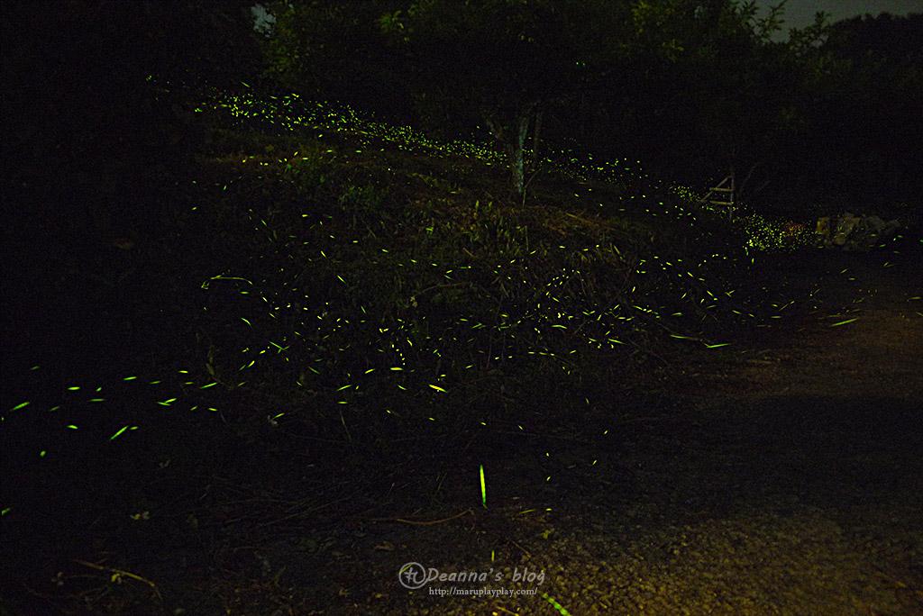 上山回家螢火蟲