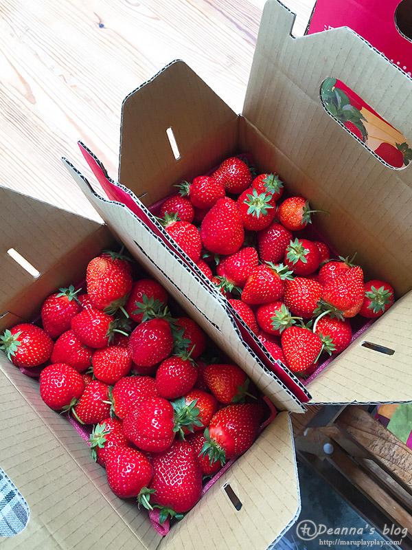 上山回家草莓