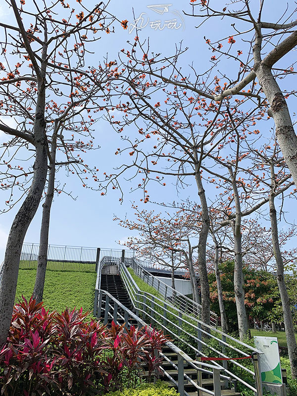 新生公園木棉花