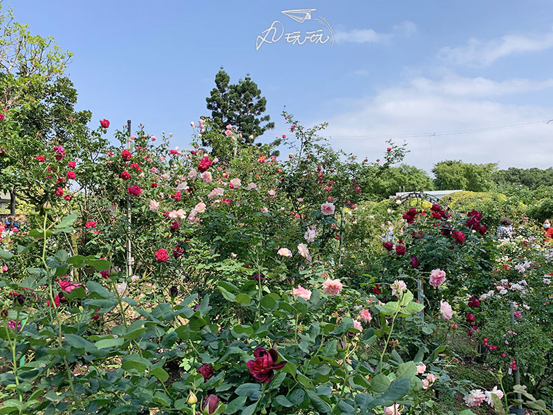 台北玫瑰展