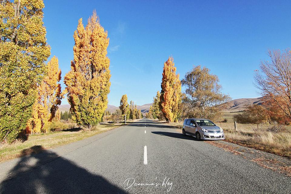 紐西蘭本莫爾