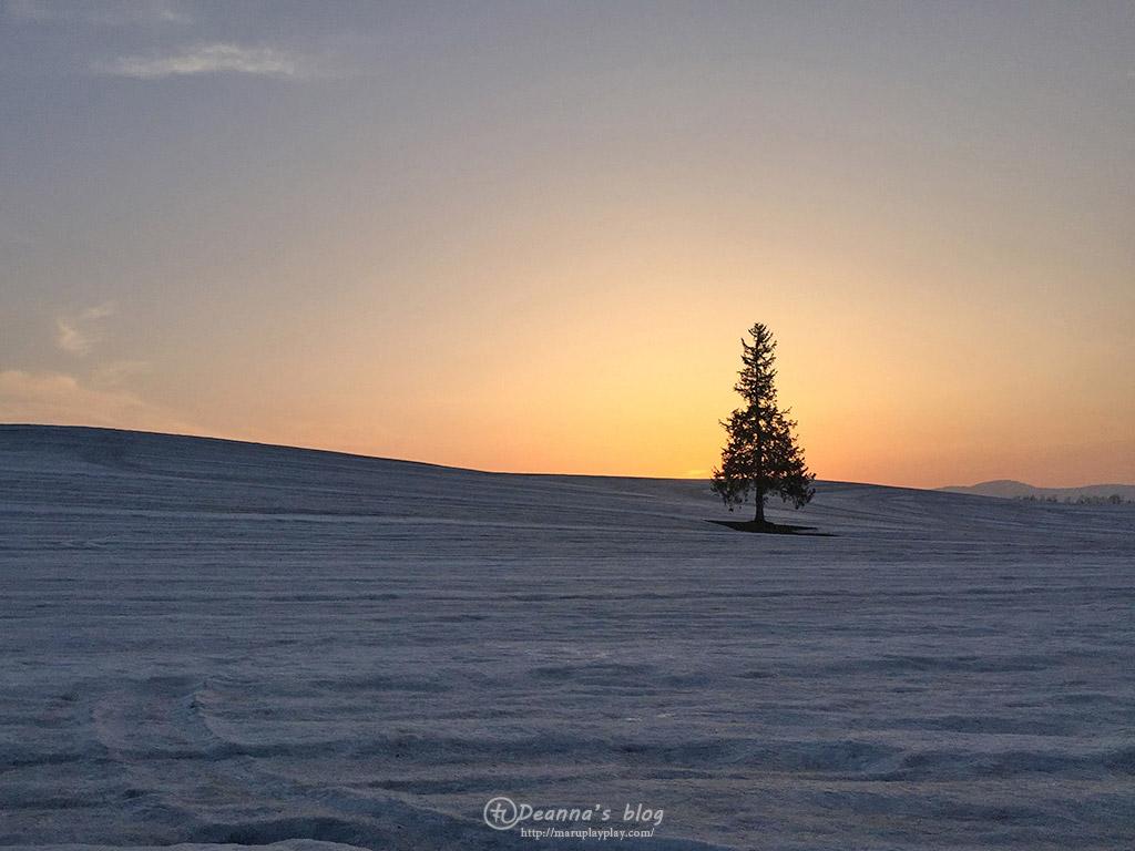 美瑛聖誕樹