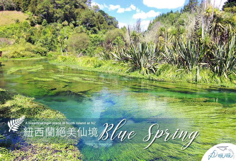 紐西蘭景點|Blue Spring北島必去,絕美夢幻藍泉秘境