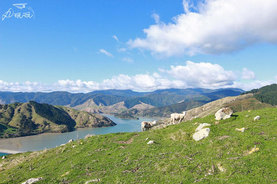 紐西蘭景點Cable bay