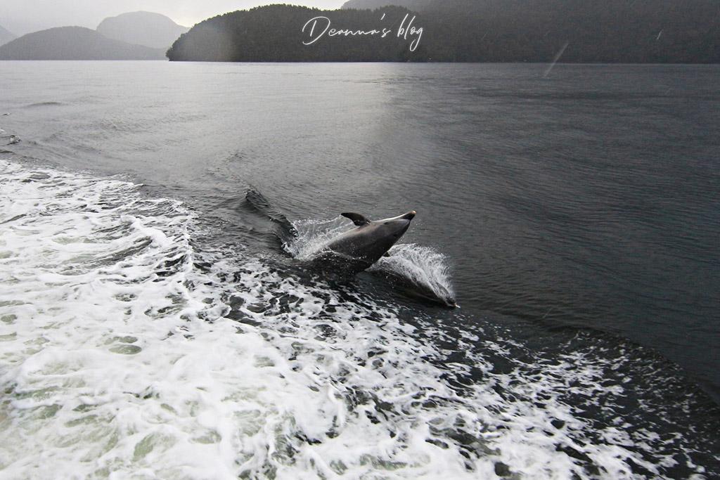 神奇峽灣海豚