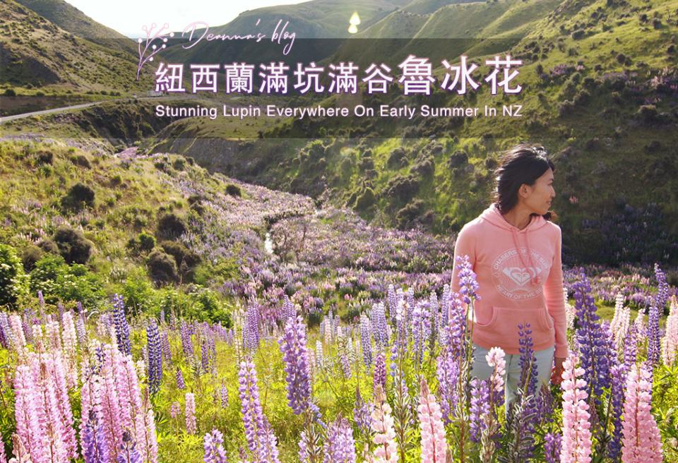 紐西蘭旅遊|Lindis Pass魯冰花海美景不輸Tekapo