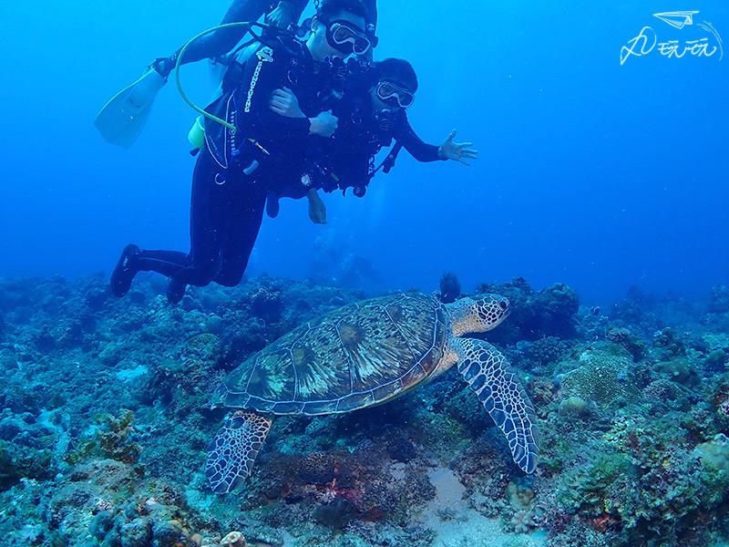 小琉球潛水海龜
